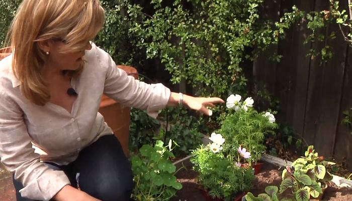 700_herb-garden-rehab