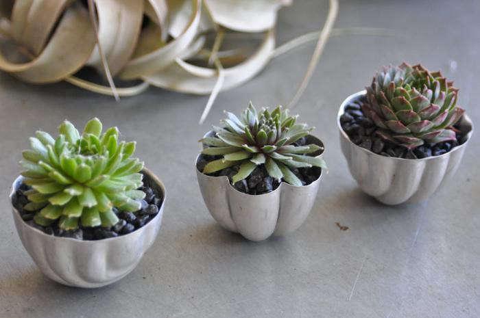 700_lila-b-succulents-in-jello-molds