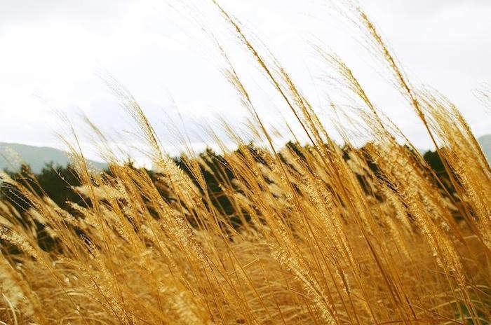 700_soni-highland-hike-grasses