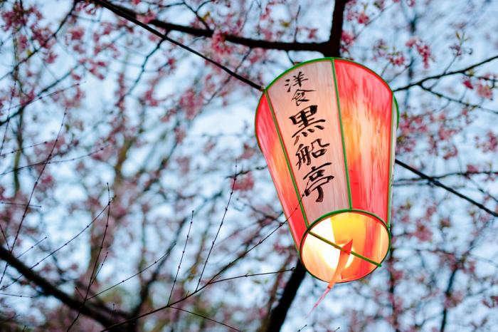 700_ueno-park-cherry-blossom