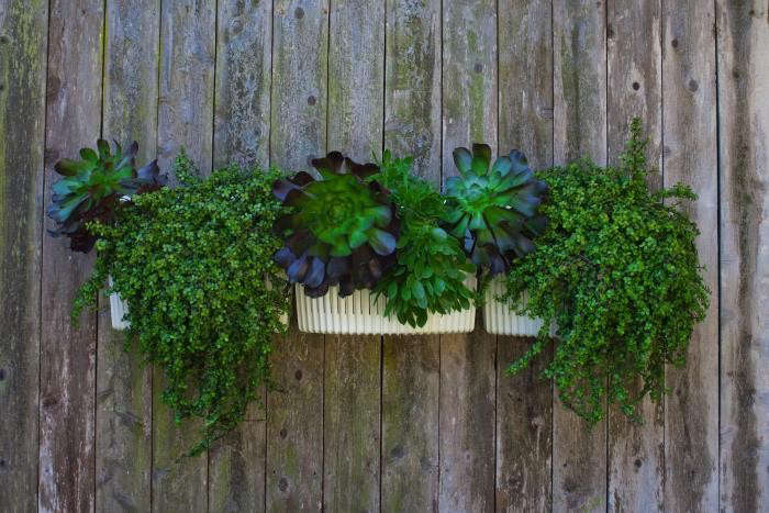 Plant a Woolly Pocket Living Wall Garden