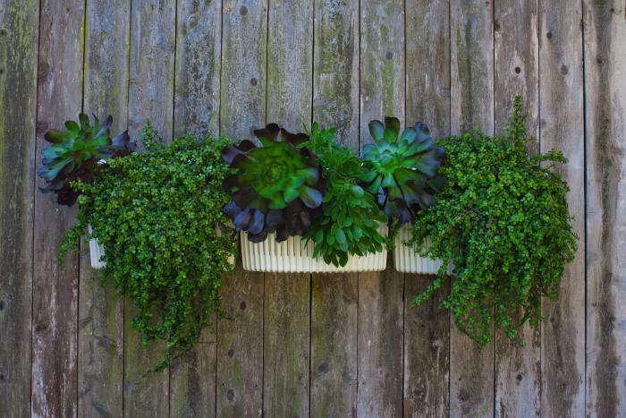 The Next Generation Vertical Garden: Woolly Pockets All