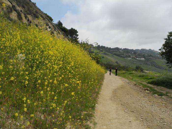 700_ws-trail