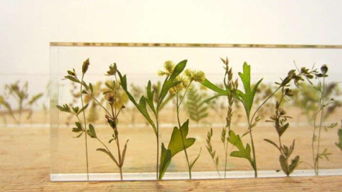 tudio-note-garden-ruler