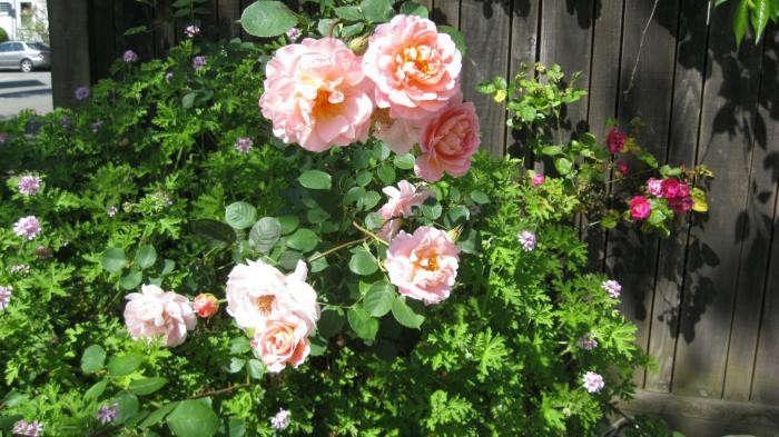700_berkeley-rose-garden-12