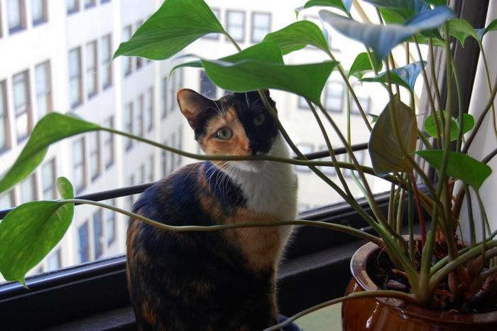 700_cat-with-houseplant