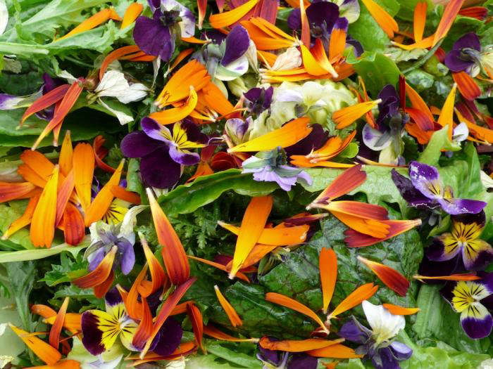 edible-flowers-nasturtium-pansies-violas-salad-lettuce-gardenista