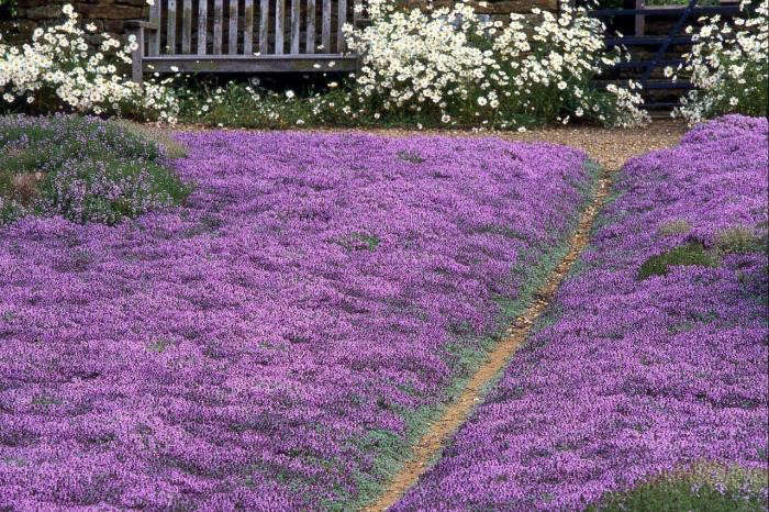 700_dan-pearson-garden-3-jpeg