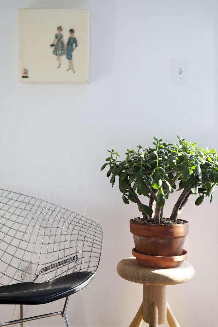 700_kitka-jade-plant