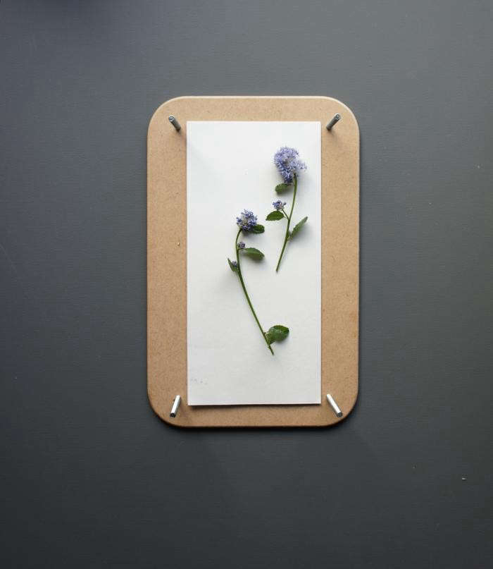 700_pressed-flowers-05