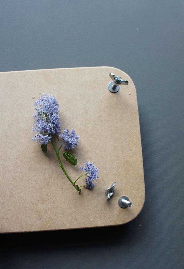 700_pressed-flowers-06