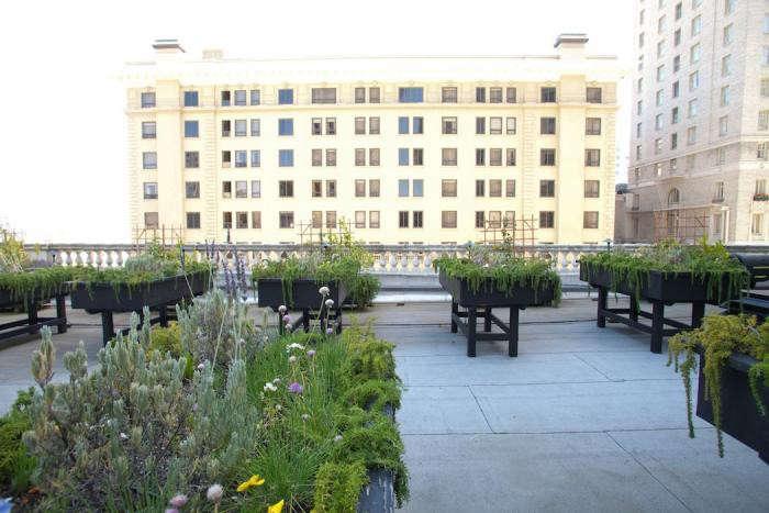 700_fairmont-garden-raised-beds