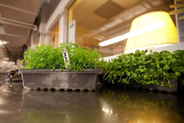 700_fairmont-seedlings-in-flats