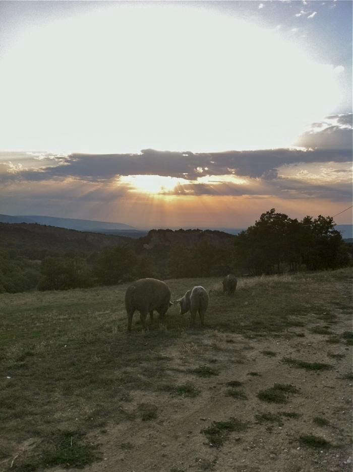 700_ferme-sunset