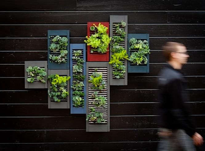 700_lila-b-succulent-shutters-at-stable-cafe