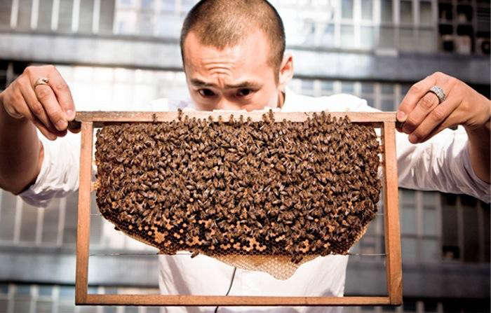700_michael-holding-a-frame-of-bees-hk-honey-jpeg