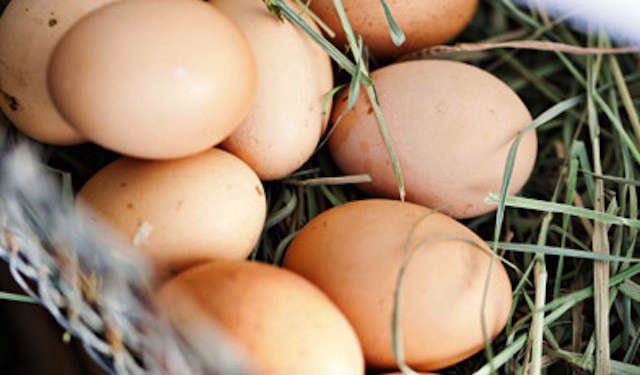 agrarian-eggs-image