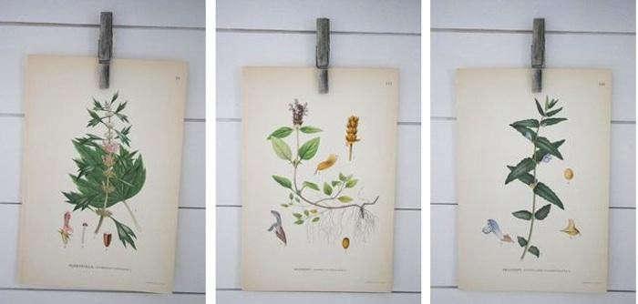 700_swedish-botanicals
