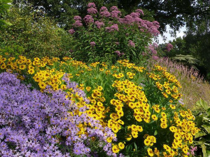 beth-chatto-garden-aster-gardenista