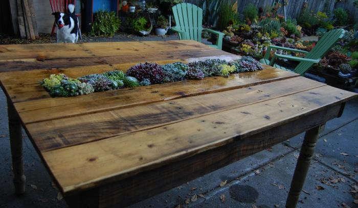 700_diy-succlent-table-in-situ