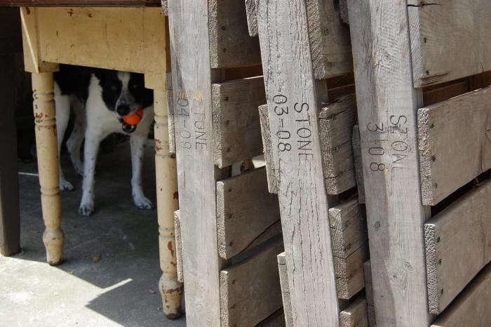 700_diy-succulent-palletes-table-dog