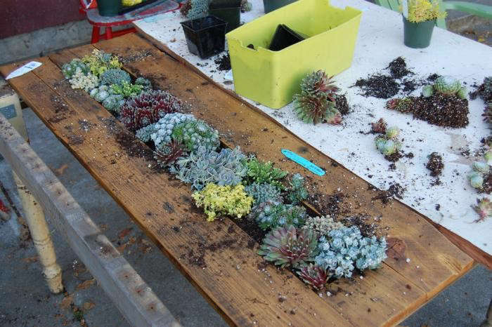 700_diy-succulent-table-planting-two