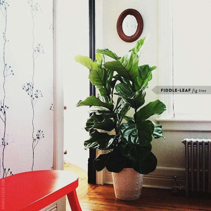 700_doorsixteen-dressingroom-fiddleleaffig