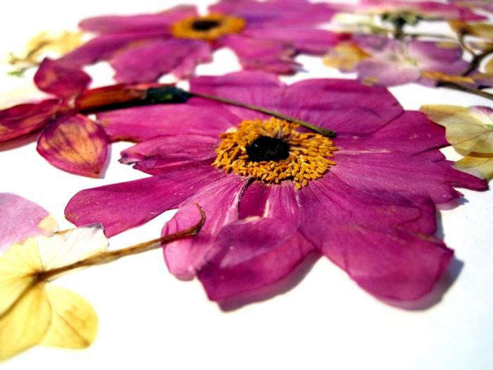 700_dried-flowers02