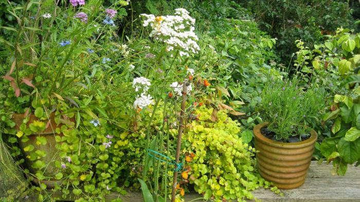 700_ruth-terrace-garden-12