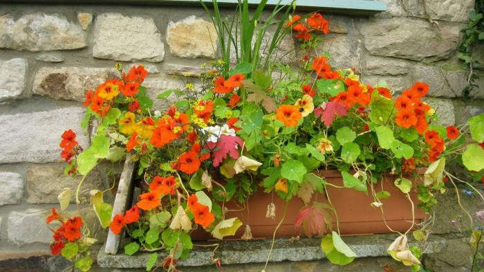 700_ruth-terrace-garden-6