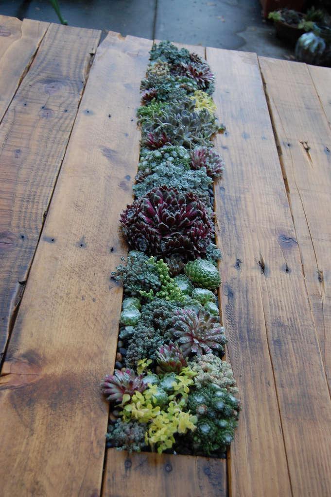 Diy Succulents Table Gardenista