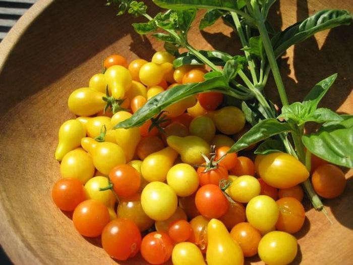 700_15-tomatoes