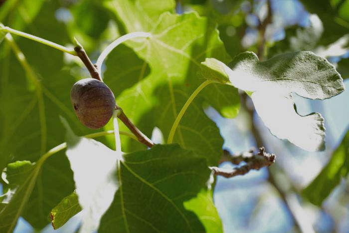 700_figs-1