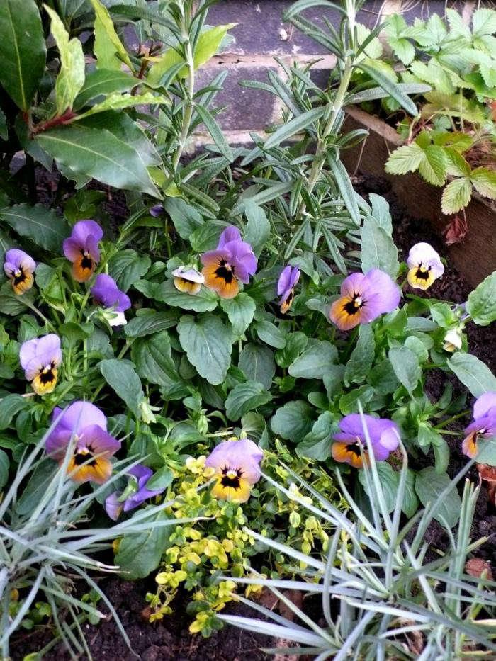 700_open-garden