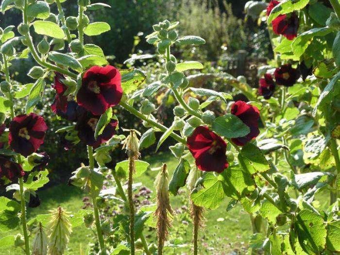 700_remodelista-ben-pentreath-fall-garden-04