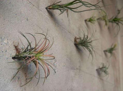 rm-floragrubb-plant-hooks4