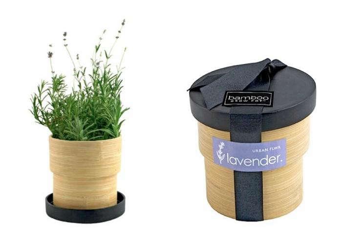 700_bamboo-grow-pot-lavender-duo
