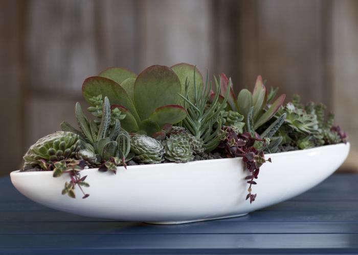 World S Best Tabletop Garden Gardenista
