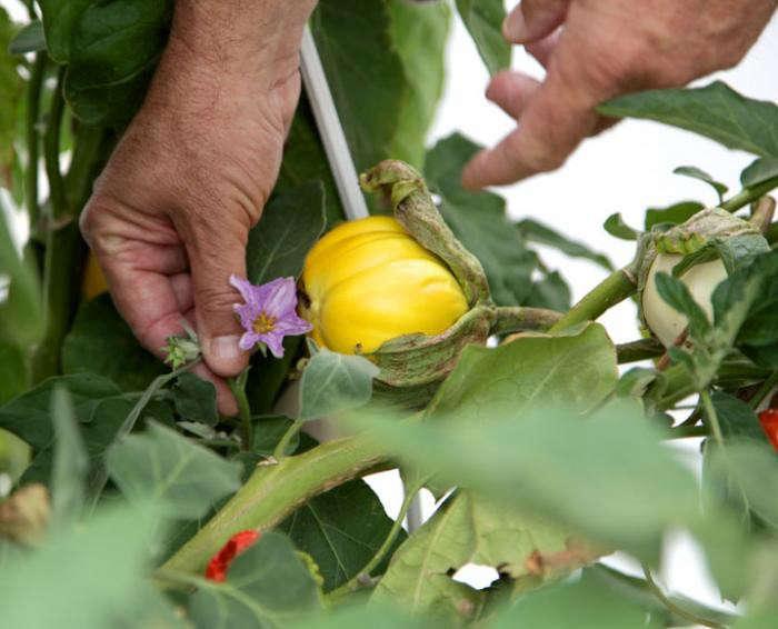 700_playa-rivera-rooftop-garden-chef-john-sedlar-12