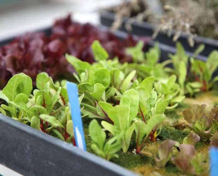 700_playa-rivera-rooftop-garden-chef-john-sedlar-3