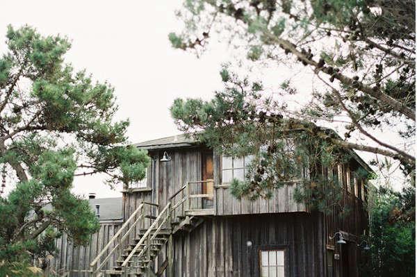 mankas-pine-tree