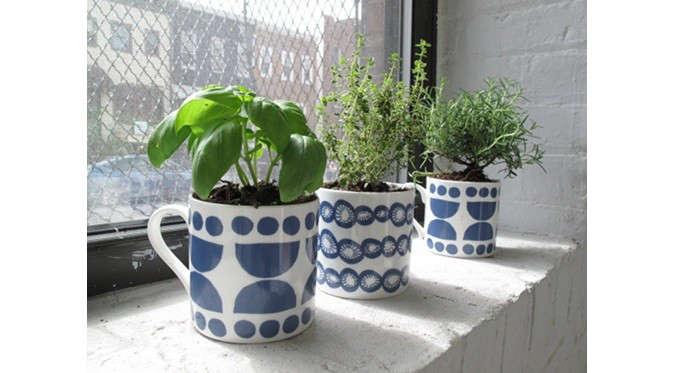 plant-in-mugs-lotta-j