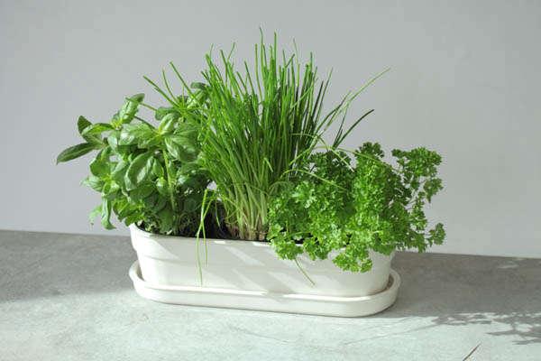 London Design Week Herbivore Planter By Jody Leach