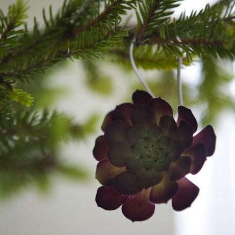 succulent-purple-1