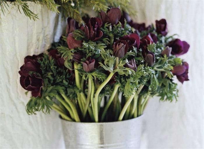 700_700-dutch-florist-purple-anenomes-jpeg