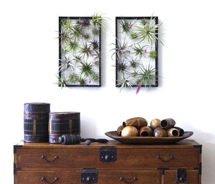 700_air-plant-fram-flora-grubb