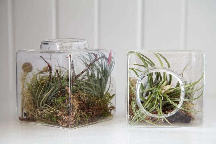 700_flora-grubb-aerium-pair