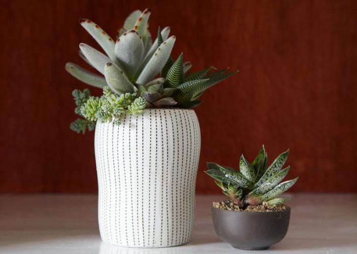 700_flora-grubb-potted-succulent-duo