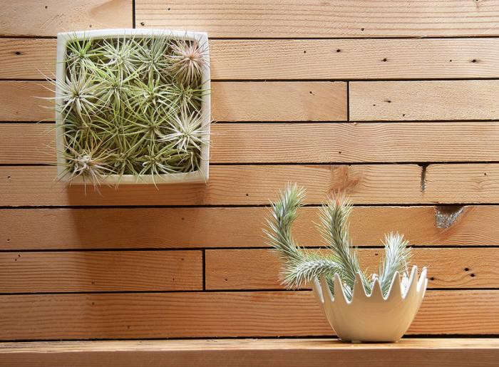 700_flora-grubb-tillandsias-wall-shelf