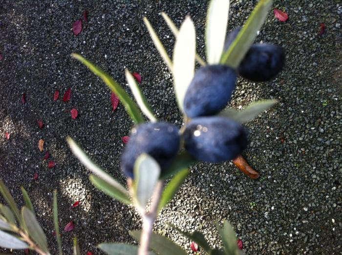 700_olives-1